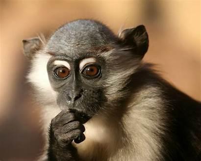 Monkey Wallpapers Boy Funny Nature Desktop