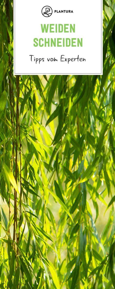 Kräuter Im Garten Pflanzen Zeitpunkt by Weiden Schneiden Zeitpunkt Vorgehen Experten Tipps