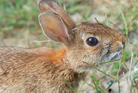 drug resistant superbugs   wild animals wired