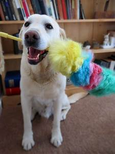 tips to de dog your home holidays4dogs home boarding With dog cleaning house