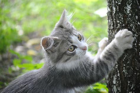 Katze erbrechen lassen