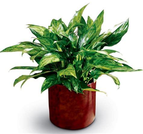 Plants; Foliage Plants; House Plants; Blumengarten Florist