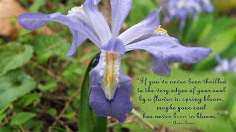 quotes  flowers blooming quotesgram