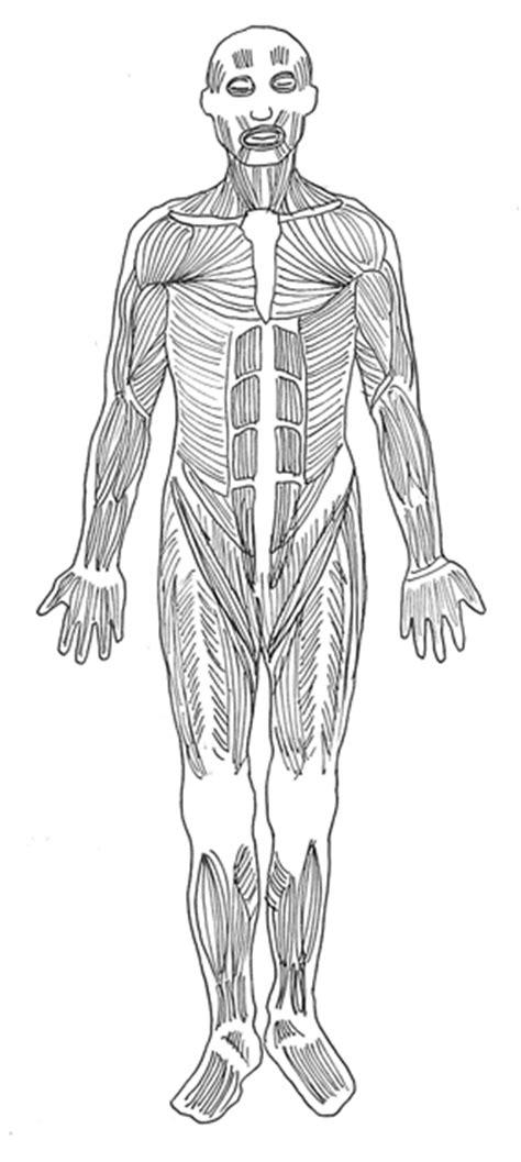 shoulders cliparts diagram   clip art