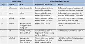 Idealgewicht Hund Berechnen : futter tierarzt wie viel futter ~ Themetempest.com Abrechnung