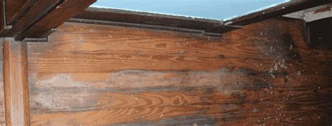 hardwood floor buckled water hardwood floor water damage your how to guide in 5 steps