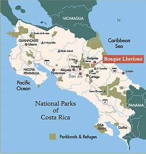 Habitat - Costa Rican Cougar
