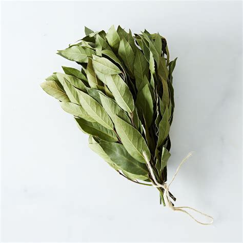 Fresh Sweet Bay Laurel Leaves on Food52