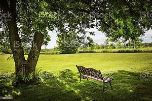 Park, Bench, Sitting, Under, A, Tree, Stock, Photo, -, Download, Image, Now