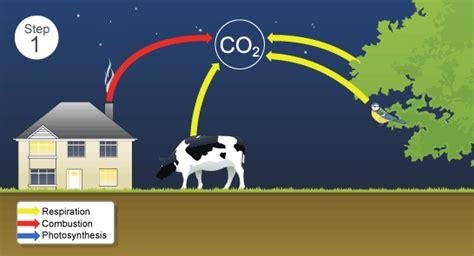 bbc gcse bitesize carbon  oxygen cycles