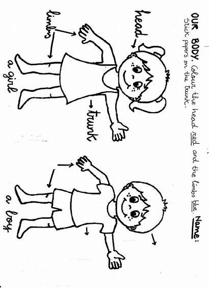 Google Coloring Parts Preschool Printable Sheets Sheet