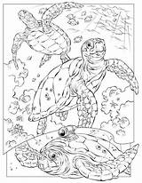 Coloring Ocean Pages Printable Sea Under Adults Explorer Turtle sketch template