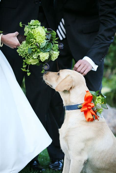 wedding details dog ring bearer collar elizabeth designs the wedding blog