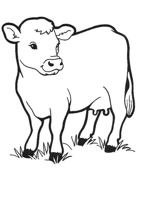 Coloring Picture For Kid by Free Printable Cow Coloring Pages For