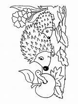 Hedgehog Coloring Pages Printable Animals Getcolorings sketch template