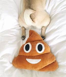 Common Causes Of Dog Diarrhea