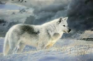 Tundra Animals Wolf