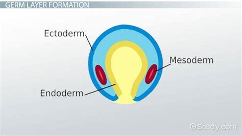 Definition, Development & Formation