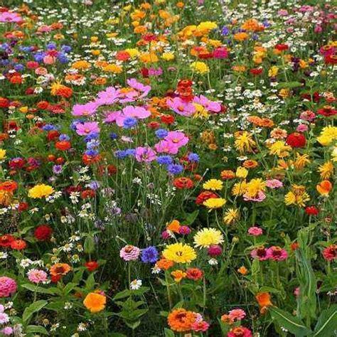 sognare fiori significato cosa significa sognare fiori il simbolismo dei fiori nei