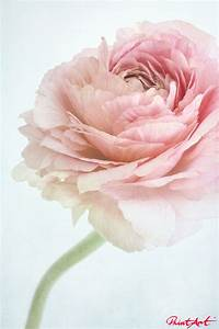 Pastell Rosa Wandfarbe : schlafzimmer pastell rosa pastell schlafzimmer farben ~ Sanjose-hotels-ca.com Haus und Dekorationen