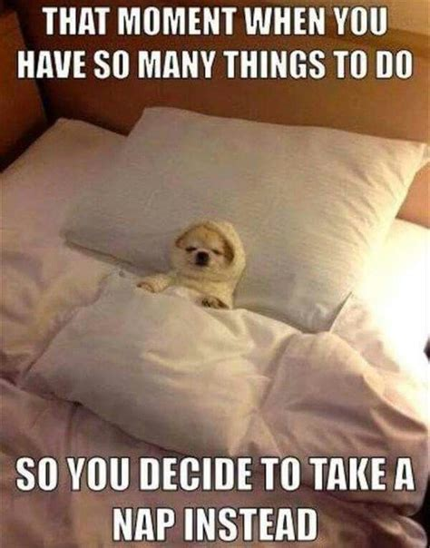 Nap Meme - best 25 naps funny ideas on pinterest todays naps funny puppies and nap time quotes