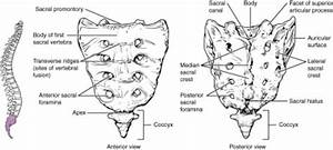 Sacral Insufficiency Fractures - Physiopedia
