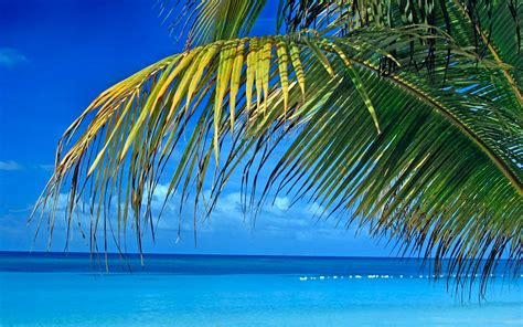 Tropical [16] Blue Splendor [29june2014sunday] [3840x2400