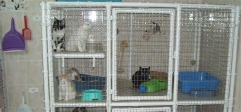 cage pour chat exterieur chats du quercy animal webaction
