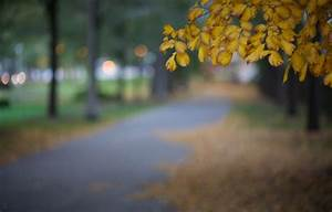 Wallpaper Autumn  Leaves  Macro  The City  Glare  Park