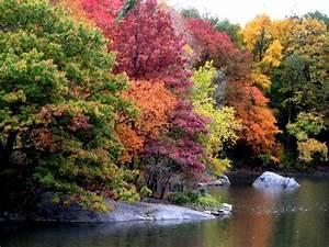 Autumn Backgrounds Wallpapers, Latest Fall Desktop ...