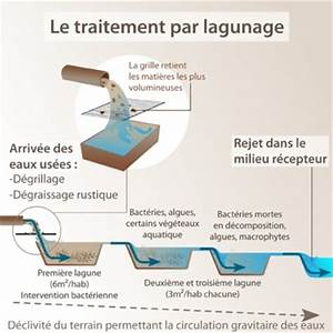 Eaux Vannes Eaux Usées : lagunage eaux us es fonctionnement ooreka ~ Farleysfitness.com Idées de Décoration