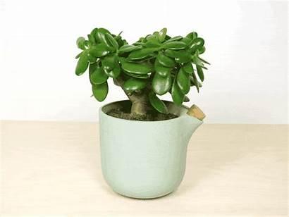 Natural Flowerpot Studio Watering Balance Self Kickstarter