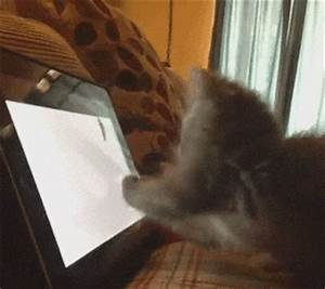 Cant Fool Me Tom And Jerry GIF - Find & Share on GIPHY