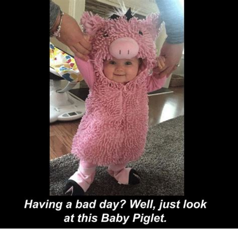 Having A Baby Meme - funny piglets memes of 2017 on sizzle bad