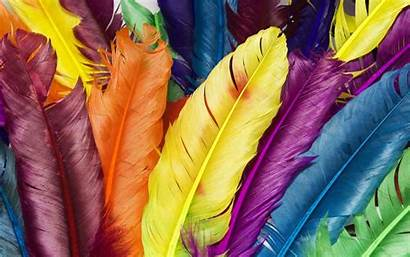 Feathers Colors Wallpapers