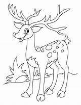 Deer Coloring Pages Lizard sketch template