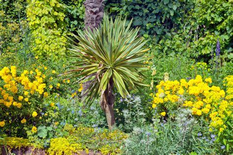 Yucca-palme Im Garten » Diese Palmlilienarten Können Sie