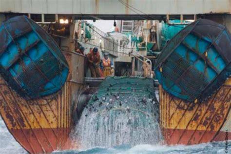 si鑒e de l omc l omc réussira t à amener la pêche mondiale à la durabilité