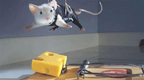 cuisine fait soi meme voici comment fabriquer un piège à souris efficace sans les tuer