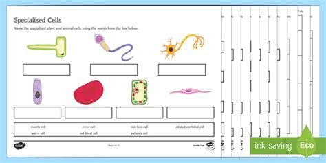 ks specialised cells worksheet activity sheets