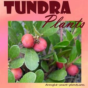 Tundra Plants Plants That Take Challenging Conditions In