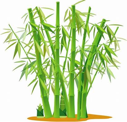 Bamboo Optimise Garden