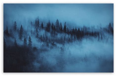 dark woods aesthetic ultra hd desktop background wallpaper