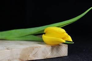 Schnittblumen Länger Frisch : so bleiben schnittblumen l nger frisch richtiger standort entscheidend immobilien magazin ~ Watch28wear.com Haus und Dekorationen