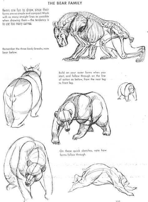 art  animal drawing book  art  animal drawing