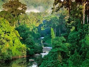 River in Lowland Rainforest of Danum Valley – OTHERWAYS