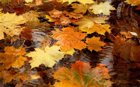 Autumn Themed Wallpapers For Android by Free Autumn Desktop Wallpaper Backgrounds Wallpaper Cave