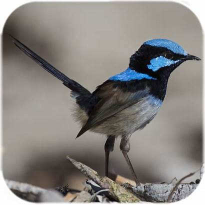 Burung Bergerak Google Aplikasi Hidup Play