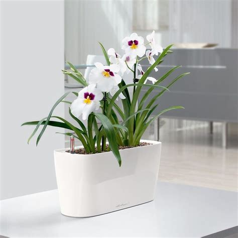 Indoor Windowsill Flowers by Lechuza Windowsill Self Watering Indoor Planter Taupe