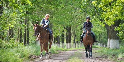 riding horseback jersey levels trail lessons rides